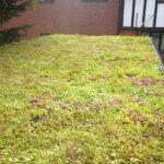 finished sedum green roof