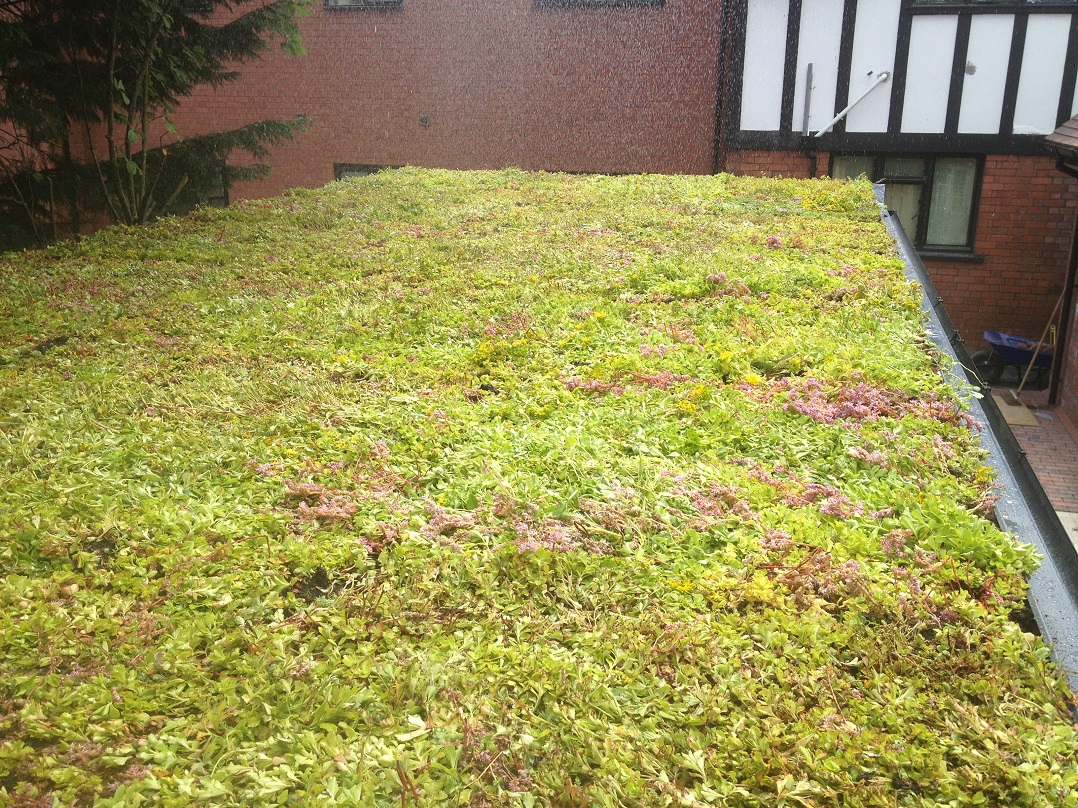 Green Sedum Wildflower Roofs S Amp P Roofing